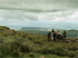 Leshotho landscape horses